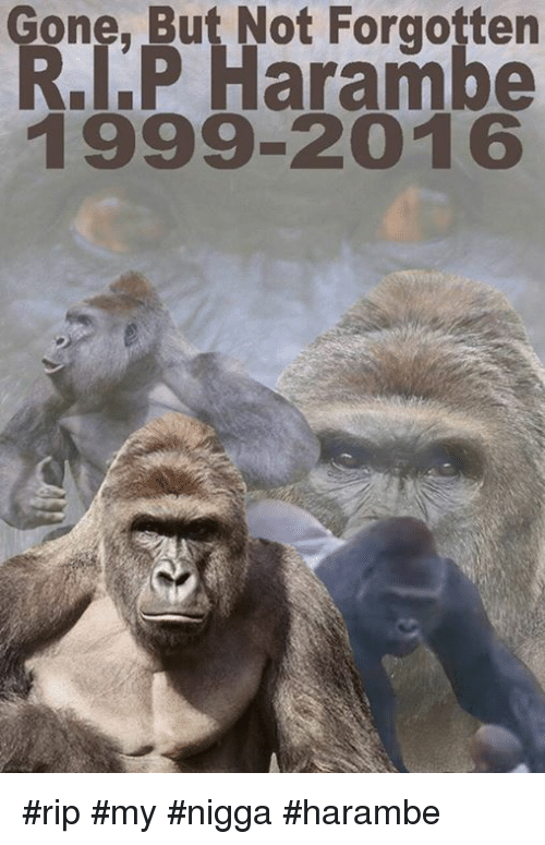 9a85ae85b Memes, My Nigga, and Harambe: Gone, But Not Forgotten RIP Harambe 1999