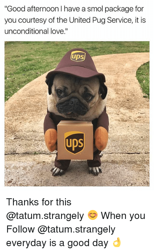 """Love, Memes, and Good: """"Good afternoon I have a smol package for  you courtesy of the United Pug Service, it is  unconditional love.""""  UDS  UDS Thanks for this @tatum.strangely 😊 When you Follow @tatum.strangely everyday is a good day 👌"""