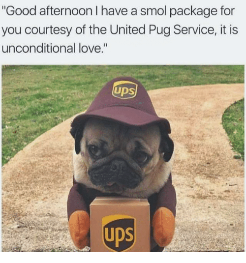 """Love, Memes, and Good: Good afternoon I have a smol package for  you courtesy of the United Pug Service, it is  unconditional love.""""  UDS"""