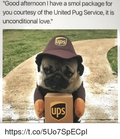 """Love, Memes, and Good: Good afternoon I have a smol package for  you courtesy of the United Pug Service, it is  unconditional love.""""  UDS  ps https://t.co/5Uo7SpECpI"""