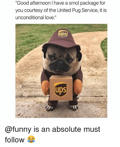 """Funny, Love, and Memes: Good afternoon I have a smol package for  you courtesy of the United Pug Service, it is  unconditional love.""""  UDS  UDS @funny is an absolute must follow 😂"""