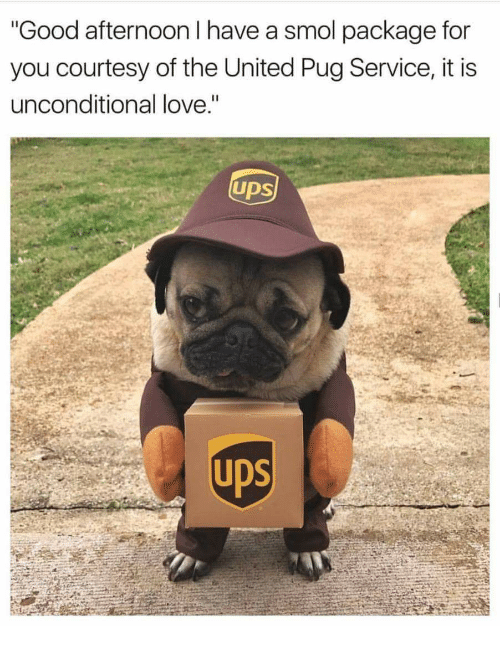 Good Afternoon I Have A Smol Package For You Courtesy Of The United