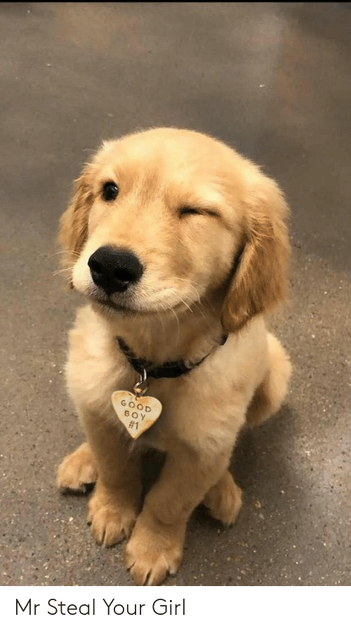 Girl, Good, and Your Girl: GOOD  BOY  Mr Steal Your Girl