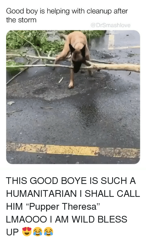 "Bless Up, Memes, and Good: Good boy is helping with cleanup after  the stornm  @DrSmashlove THIS GOOD BOYE IS SUCH A HUMANITARIAN I SHALL CALL HIM ""Pupper Theresa"" LMAOOO I AM WILD BLESS UP 😍😂😂"