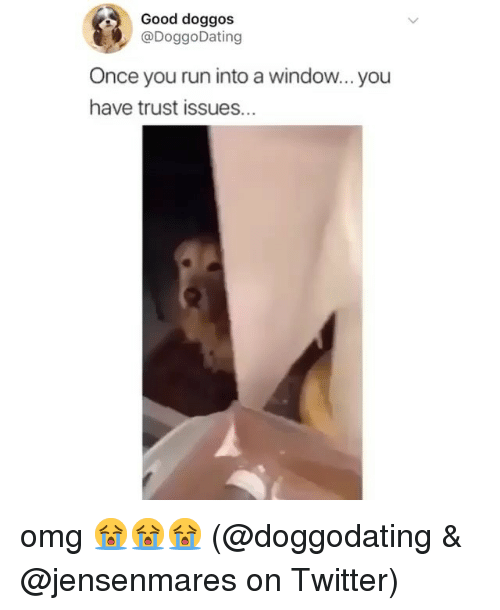 Memes, Omg, and Run: Good doggos  @DoggoDating  Once you run into a window...you  have trust issues. omg 😭😭😭 (@doggodating & @jensenmares on Twitter)