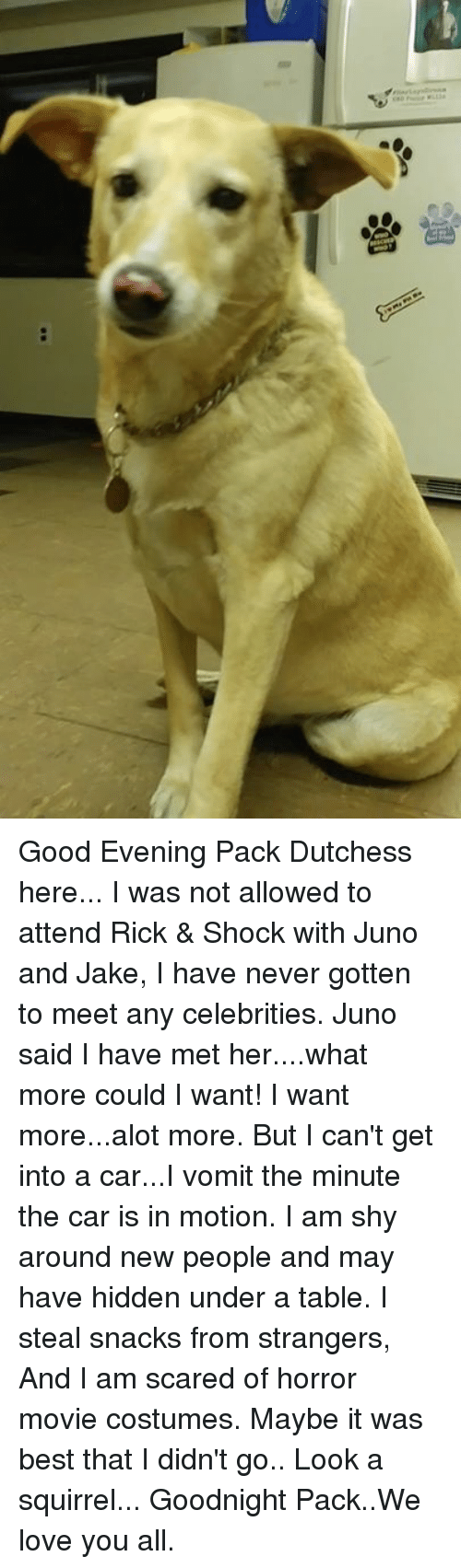 Love, Memes, and Best: Good Evening Pack Dutchess here...  I was not allowed to attend Rick & Shock with Juno and Jake, I have never gotten to meet any celebrities. Juno said I have met her....what more could I want!  I want more...alot more.  But I can't get into a car...I vomit the minute the car is in motion. I am shy around new people and may have hidden under a table. I steal snacks from strangers, And I am scared of horror movie costumes.  Maybe it was best that I didn't go..  Look a squirrel...  Goodnight Pack..We love you all.