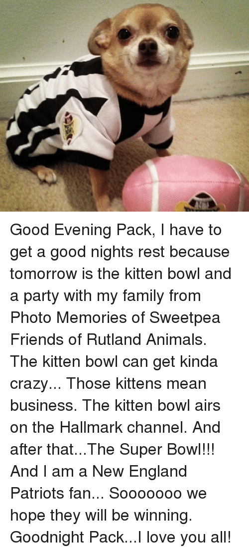Memes, New England Patriots, and Hallmark: Good Evening Pack,  I have to get a good nights rest because tomorrow is the kitten bowl and a party with my family from Photo Memories of Sweetpea Friends of Rutland Animals. The kitten bowl can get kinda crazy... Those kittens mean business.  The kitten bowl airs on the Hallmark channel.  And after that...The Super Bowl!!!  And I am a New England Patriots fan... Sooooooo we hope they will be winning.  Goodnight Pack...I love you all!