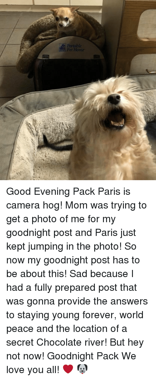 good evening pack paris is camera hog mom was trying to get a photo