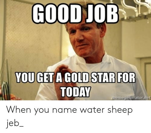 Good, Star, and Today: GOOD JOB  YOU GET A GOLD STAR FOR  TODAY  memegenerator.net When you name water sheep jeb_