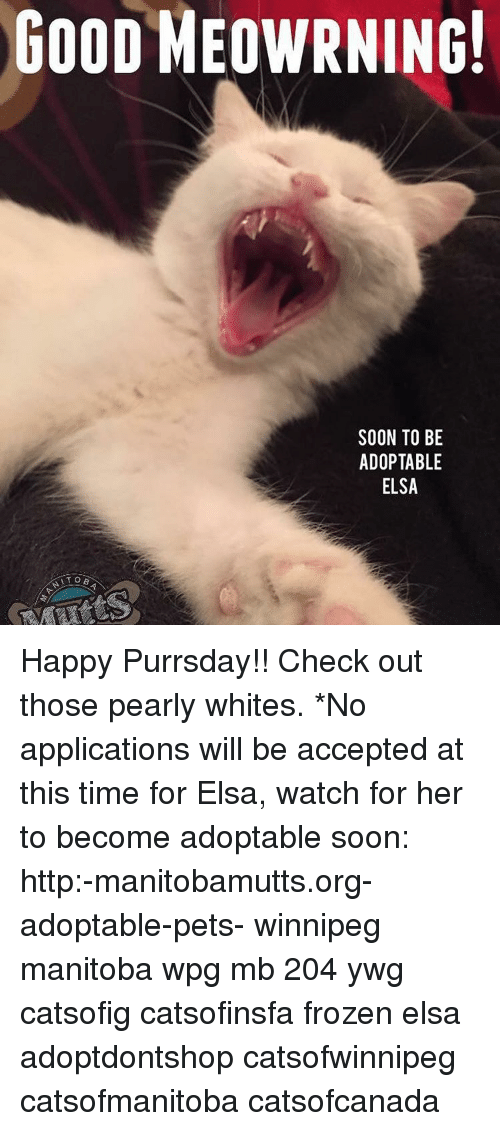 Good Meowrning Soon To Be Adoptable Elsa Happy Purrsday