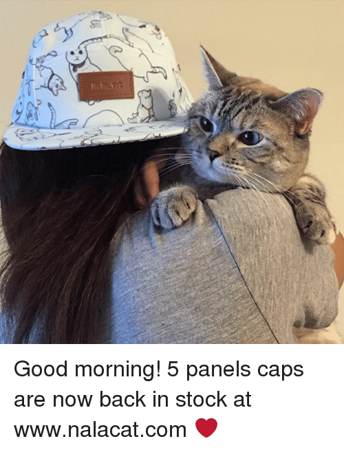 Memes, Good Morning, and Good: Good morning! 5 panels caps are now back in stock at www.nalacat.com ❤️