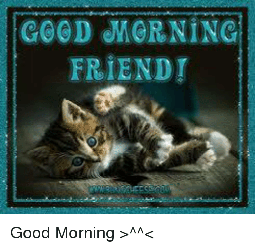 Image result for good morning friend animal meme