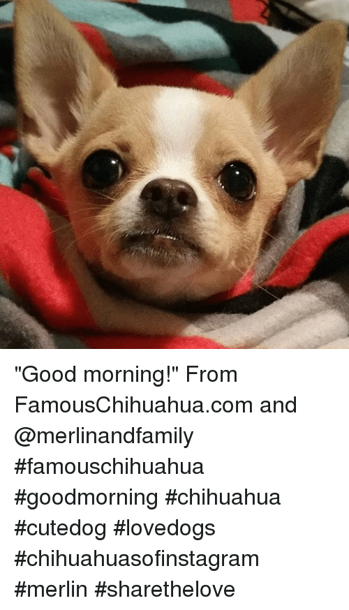 Good Morning From Famouschihuahuacom And Famouschihuahua