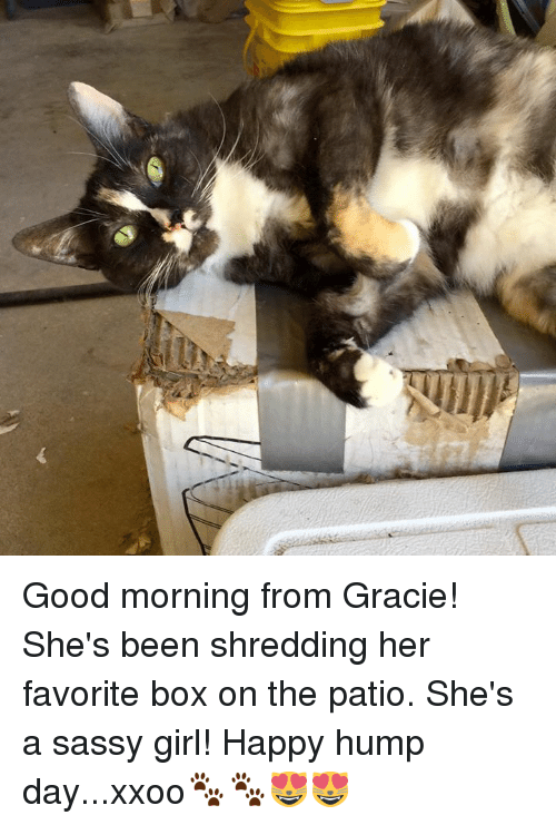 Good Morning From Gracie Shes Been Shredding Her Favorite Box On