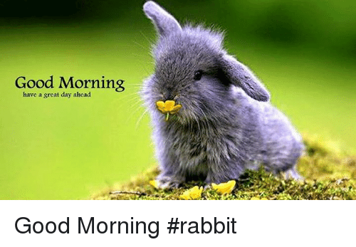 Good Morning Have A Great Day Ahead Good Morning Rabbit Meme On Meme