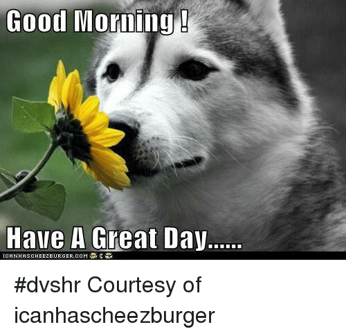 Good Morning Have A Great Day Dvshr Courtesy Of Icanhascheezburger