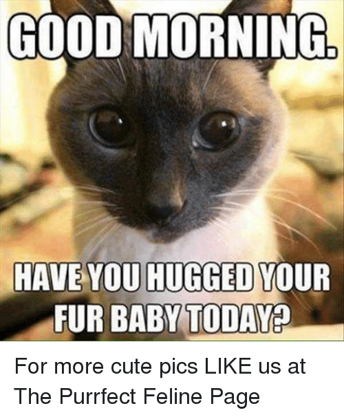 cute memes and good morning good morning have you hugged your fur baby