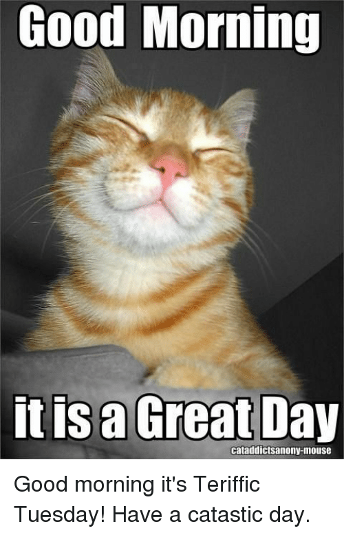 Good Morning It Is A Great Day Cataddictsanony Mouse Good Morning