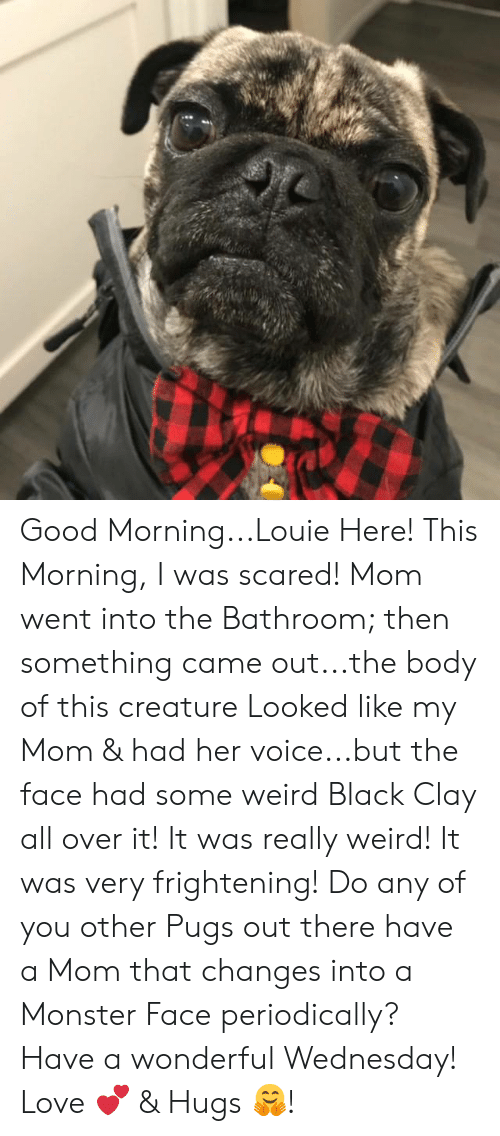 Love, Memes, and Monster: Good Morning...Louie Here! This Morning, I was scared! Mom went into the Bathroom; then something came out...the body of this creature Looked like my Mom & had her voice...but the face had some weird Black Clay all over it! It was really weird! It was very frightening! Do any of you other Pugs out there have a Mom that changes into a Monster Face periodically?  Have a wonderful Wednesday!  Love 💕 & Hugs 🤗!