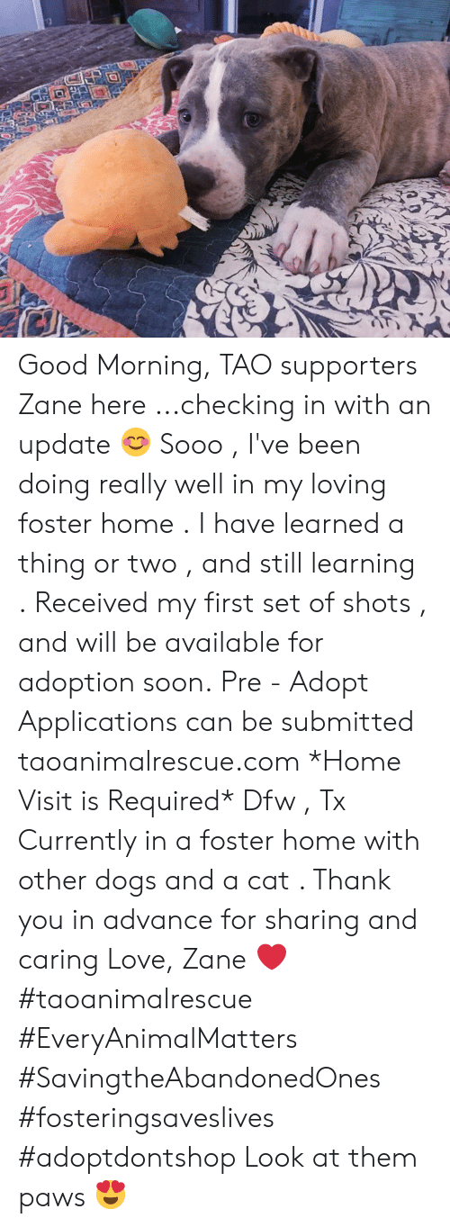 Dogs, Love, and Memes: Good Morning, TAO supporters   Zane here ...checking in with an update 😊  Sooo , I've been doing really well in my loving foster home . I have learned a thing or two , and still learning . Received my first set of shots , and will be available for adoption soon.  Pre - Adopt Applications can be submitted  taoanimalrescue.com  *Home Visit is Required*  Dfw , Tx   Currently in a foster home with other dogs and a cat .   Thank you in advance for sharing and caring   Love,  Zane ❤  #taoanimalrescue #EveryAnimalMatters #SavingtheAbandonedOnes #fosteringsaveslives #adoptdontshop   Look at them paws 😍