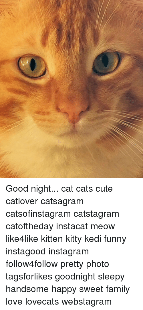 Night Cat Productions: Funny Good Night Cat Memes Of 2017 On Me.me