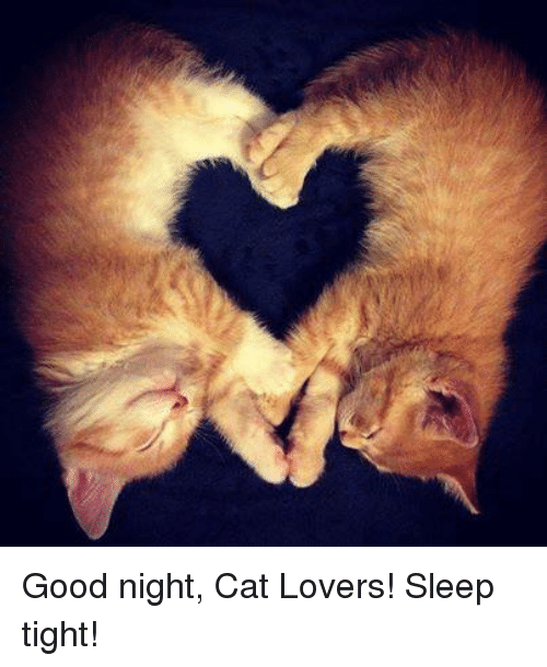 Image result for good night sleep tight cat