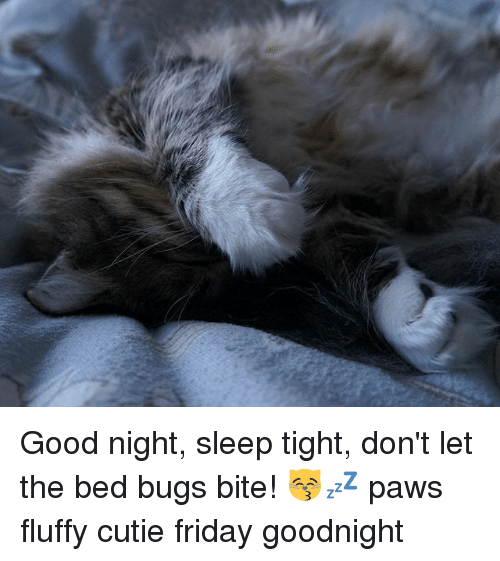 Dont Let The Bed Bugs Bite Paws Fluffy Cutie Friday Goodnight Memes And Good Night Sleep Tight Don