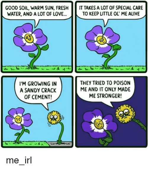 Alive, Fresh, and Love: GOOD SOIL, WARM SUN, FRESH  WATER, AND A LOT OF LOVE..  IT TAKES A LOT OF SPECIAL CARE  TO KEEP LITTLE OL' ME ALIVE  'M GROWING IN  A SANDY CRACK  OF CEMENT!  THEY TRIED TO POISON  ME AND IT ONLY MADE  ME STRONGER! me_irl