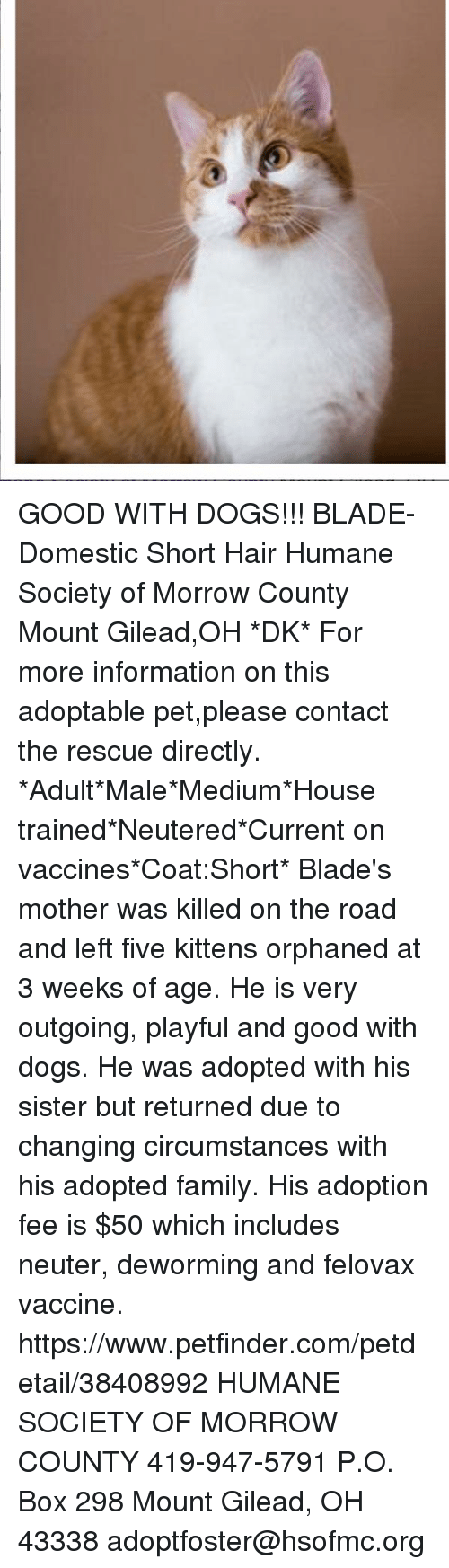 Ohio morrow county mount gilead - Blade Dogs And Family Good With Dogs Blade Domestic