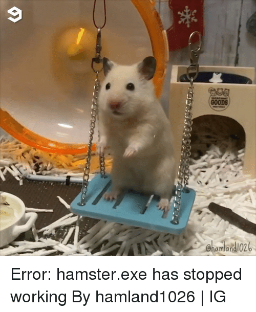 Dank, Hamster, and 🤖: GOODS  amlan Error: hamster.exe has stopped working  By hamland1026 | IG