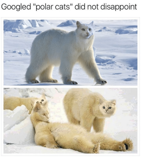 googled-polar-cats-did-not-disappoint-14