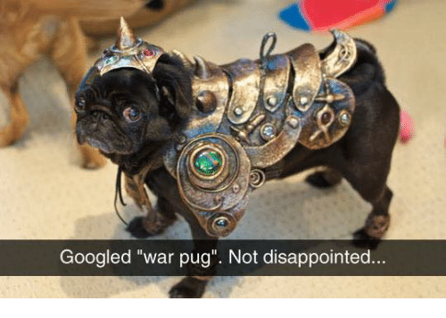 """Disappointed, Memes, and 🤖: Googled """"war pug"""". Not disappointed."""
