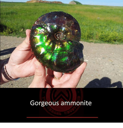 Memes, Gorgeous, and 🤖: Gorgeous ammonite