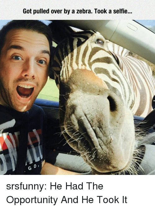Selfie, Tumblr, and Blog: Got pulled over by a zebra. Took a selfie... srsfunny:  He Had The Opportunity And He Took It