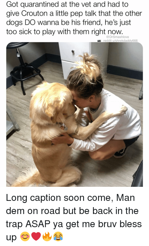 Bless Up, Dogs, and Memes: Got quarantined at the vet and had to  give Crouton a little pep talk that the other  dogs DO wanna be his friend, he's just  too sick to play with them right now.  DrSmashlove  reddit u/shrekdaddy666 Long caption soon come, Man dem on road but be back in the trap ASAP ya get me bruv bless up 😊❤️🔥😂
