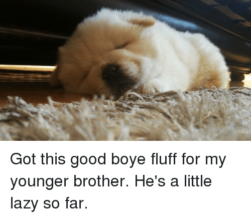 Lazy, Good, and Got: Got this good boye fluff for my younger brother. He's a little lazy so far.