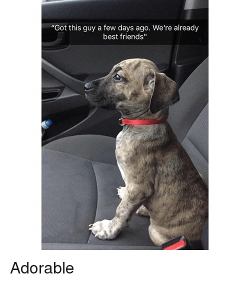 "Friends, Funny, and Best: ""Got this guy a few days ago. We're already  best friends"" Adorable"