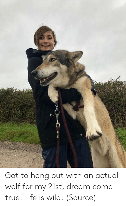 Aww, Life, and Reddit: Got to hang out with an actual wolf for my 21st, dream come true. Life is wild.(Source)