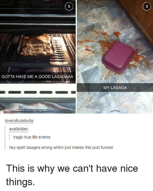 Life, Memes, and True: GOTTA HAVE ME A GOOD LASAGAAA  MY LASAGA  loverofcutebutts:  avafaidian:  tragic true life events  hey spelt lasagna wrong which just makes this post funnier This is why we can't have nice things.