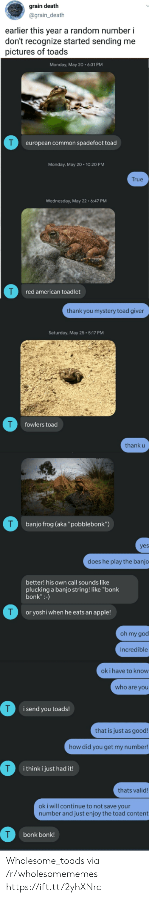 """Apple, God, and Oh My God: grain death  @grain_death  earlier this year a random number i  don't recognize started sending me  pictures of toads  Monday, May 20.6:31 PM  T  european common spadefoot toad  Monday, May 20 10:20 PM  True  Wednesday, May 22 6:47 PM  red american toadlet  thank you mystery toad giver  Saturday, May 25 5:17 PM  T  fowlers toad  thank u  T  banjo frog (aka""""pobblebonk"""")  yes  does he play the banjo  better! his own call sounds like  plucking a banjo string! like """"bonk  bonk"""":-)  T  or yoshi when he eats an apple!  oh my god  Incredible  ok i have to know  who are you  i send you toads!  that is just as good!  how did you get my number!  T  i think i just had it!  thats valid!  oki will continue to not save your  number and just enjoy the toad content  bonk bonk! Wholesome_toads via /r/wholesomememes https://ift.tt/2yhXNrc"""