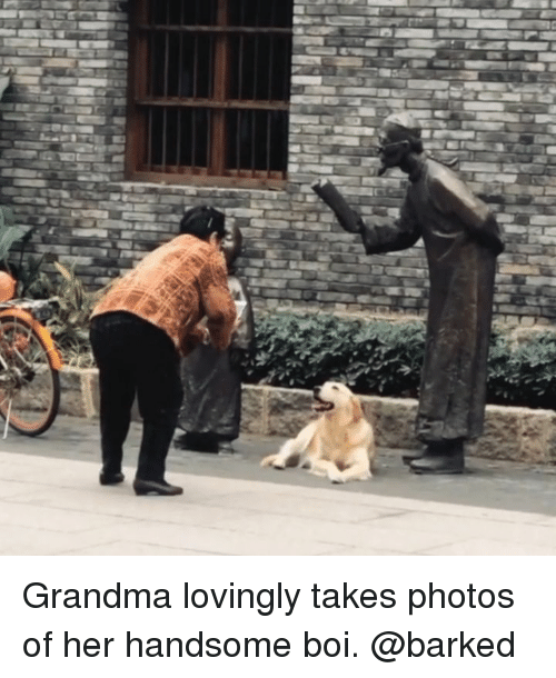 Grandma, Memes, and 🤖: Grandma lovingly takes photos of her handsome boi. @barked