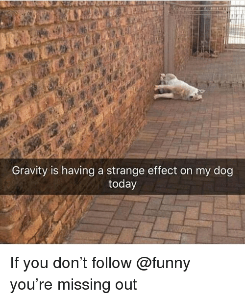 Funny, Gravity, and Today: Gravity is having a strange effect on my dog  today If you don't follow @funny you're missing out