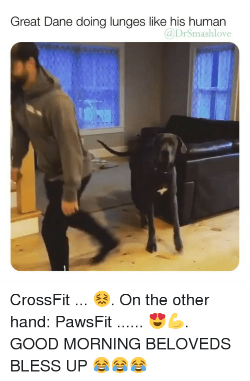 Bless Up, Memes, and Good Morning: Great Dane doing lunges like his human  @DrSmashlove CrossFit ... 😖. On the other hand: PawsFit ...... 😍💪. GOOD MORNING BELOVEDS BLESS UP 😂😂😂