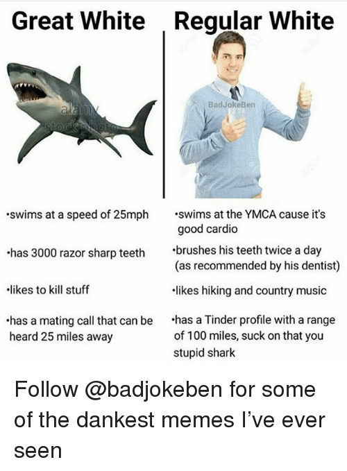 Anaconda, Memes, and Music: Great White  Reqular White  BadJokeBen  swims at a speed of 25mph at the YMCA cause it's  has 3000 razor sharp teeth brushes his teeth twice a day  likes to kill stuff  has a mating call that can be has a Tinder profile with a range  good cardio  (as recommended by his dentist)  likes hiking and country music  of 100 miles, suck on that you  stupid shark  heard 25 miles away Follow @badjokeben for some of the dankest memes I've ever seen