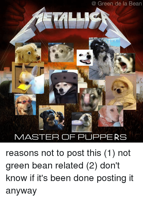Masters, Relatable, and Dank Memes: Green de la Bean  MASTER OF PUPPERS reasons not to post this  (1) not green bean related  (2) don't know if it's been done  posting it anyway