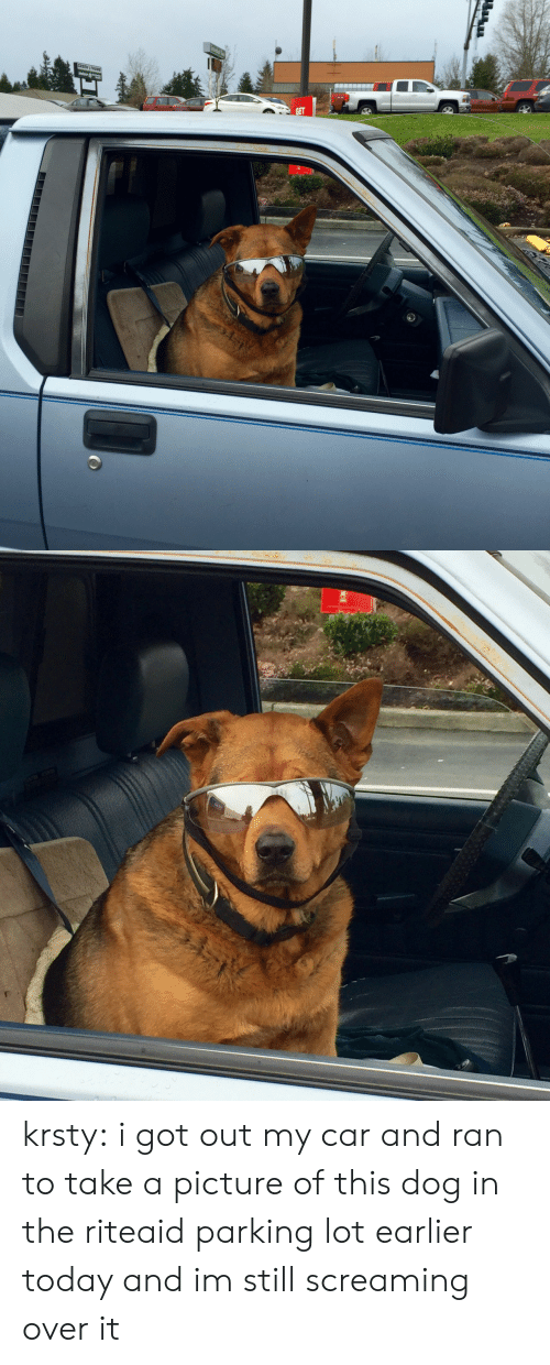 Tumblr, Blog, and Http: GREEN krsty:  i got out my car and ran to take a picture of this dog in the riteaid parking lot earlier today and im still screaming over it