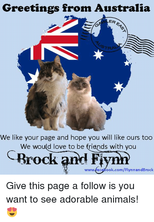 Greetings from australia er we like your page and hope you will like animals friends and love greetings from australia er we like your page and m4hsunfo