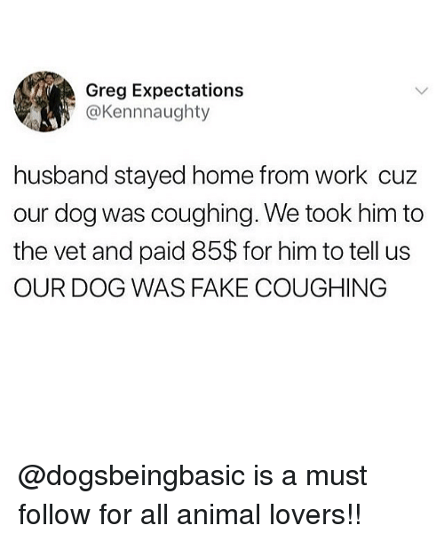 Fake, Memes, and Work: Greg Expectations  @Kennnaughty  husband stayed home from work cuz  our dog was coughing. We took him to  the vet and paid 85$ for him to tell us  OUR DOG WAS FAKE COUGHING @dogsbeingbasic is a must follow for all animal lovers!!