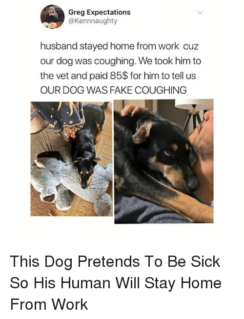 Fake, Funny, and Work: Greg Expectations  @Kennnaughty  husband stayed home from work cuz  our dog was coughing. We took him to  the vet and paid 85$ for him to tell us  OUR DOG WAS FAKE COUGHING This Dog Pretends To Be Sick So His Human Will Stay Home From Work