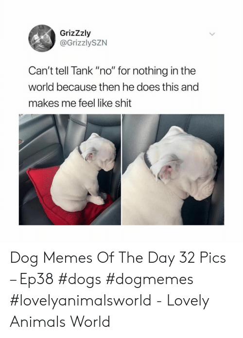 """Animals, Dogs, and Memes: GrizZzly  @GrizzlySZN  Can't tell Tank """"no"""" for nothing in the  world because then he does this and  makes me feel like shit Dog Memes Of The Day 32 Pics – Ep38 #dogs #dogmemes #lovelyanimalsworld - Lovely Animals World"""